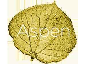 icon_city_aspen